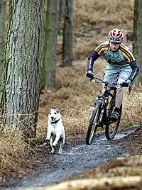 mountain biker and dog