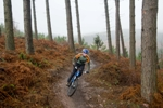mountain biker on Cannock Chase