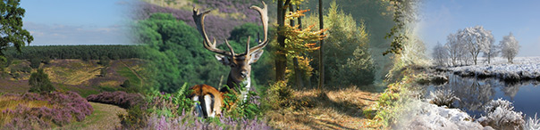 Landscape of Cannock Chase through the seasons and deer